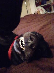 titus-teeth