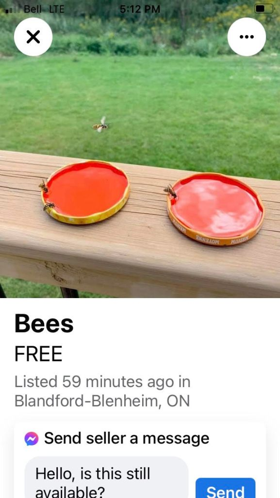 Ad that says Free Bees